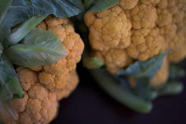 SWF_Cauliflower